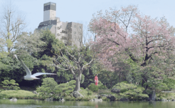 Célébration et Floraison des cerisiers au Japon - vidéo